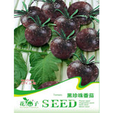 20 PCS Black Pearl Tomato Seeds High Vitamin Plant Seeds