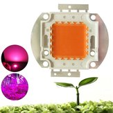 Original 100W Full Spectrum 380-840nm COB LED Grow Light Chip DIY for Indoor Plant